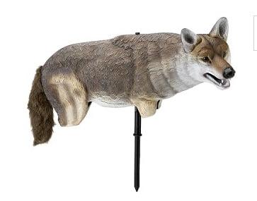Life size coyote decoy